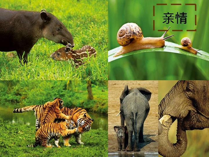 动物食物链图片